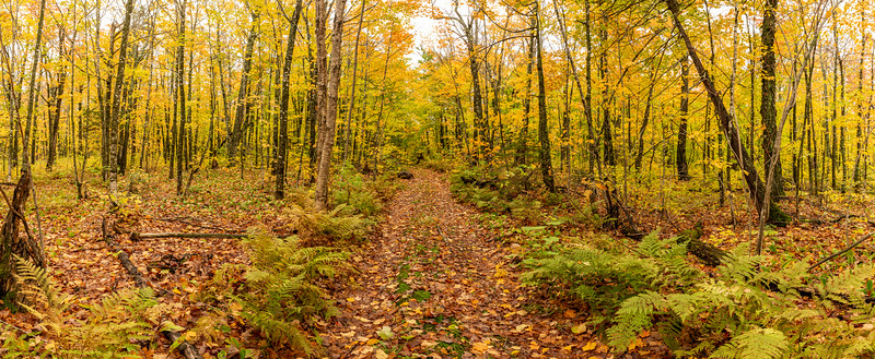Two track trail into the Northwoods