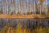 NWB-10068: Birch reflections