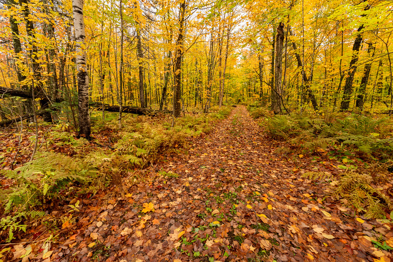 Trail into the birch forest