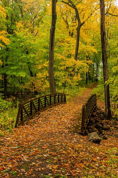 Bridge into the forest