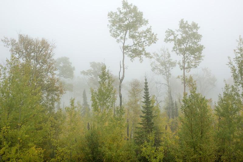 Lake effect fog on Pincushion Mountain