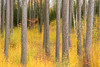 Red Pine abstract