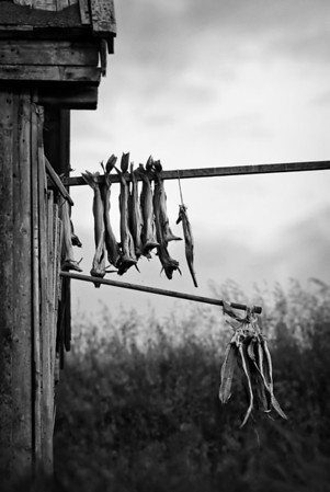 Dried fish in its natural habitat<br /> Bleik