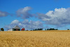 Wheat Field and Farm Glenholme NS