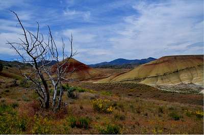 Appreciating a different view at the Painted Hills unit of the John Day Fossil Beds National Monument.