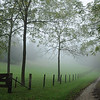 EARLY MORNING MISTS