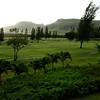 Turtle Bay Resort- the Fazio Golf Course