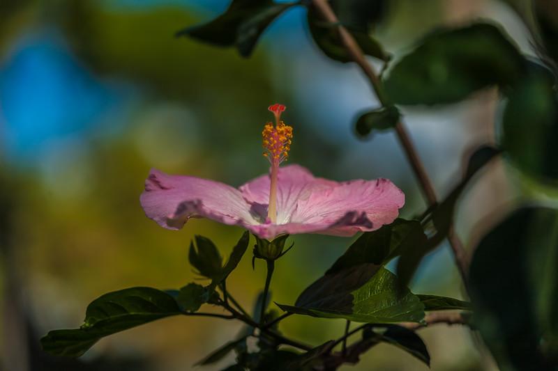 Foster Botanical Garden 1.12.14