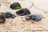 Haleiwa / Rainy day 2.22.13  Honu / Our Turtles