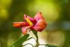 Hoomaluhia Botanical Garden Kaneohe Oahu Hawaii 2014