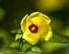Hoomaluhia Garden 1.5.14