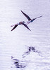 Bird Sanctuary / Kailua 1.10.14