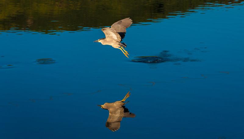Kailua Bird Sanctuary 1.18.14