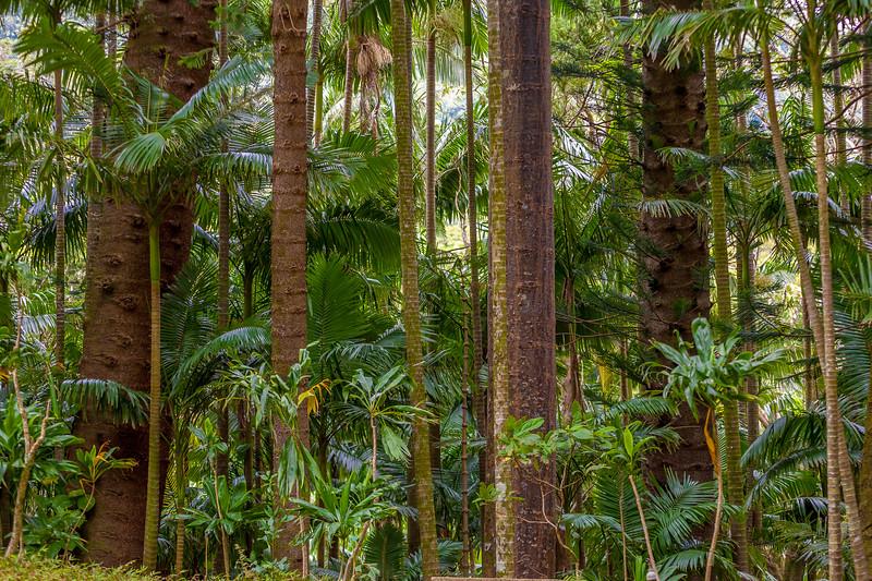Lyon's Arboretum 3.22.14