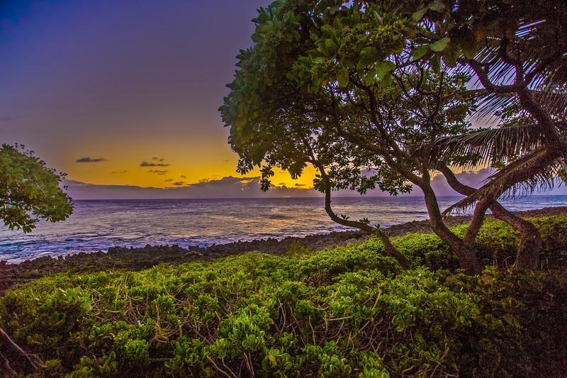 Turtle Bay. 6.10.14