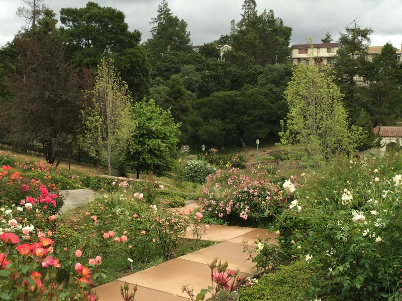 Oakland Rose Garden 2016-04-22 at 14-10-33