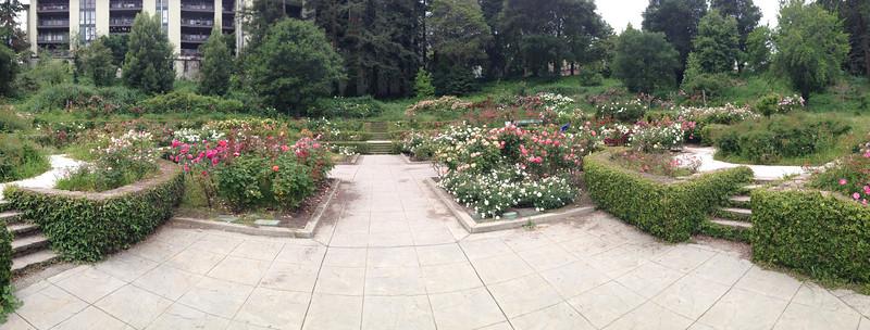 Oakland Rose Garden <br /> April 2014<br /> Oakland Rose Garden 2014-04-21 at 14-23-43