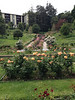 Oakland Rose Garden <br /> April 2014<br /> Oakland Rose Garden 2014-04-21 at 14-14-16