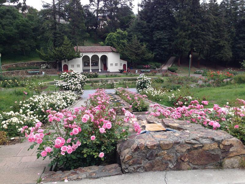 Oakland Rose Garden <br /> April 2014<br /> Oakland Rose Garden 2014-04-21 at 14-18-26