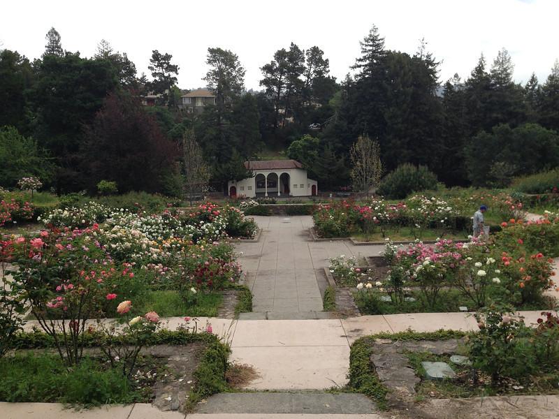 Oakland Rose Garden <br /> April 2014<br /> Oakland Rose Garden 2014-04-21 at 14-25-41