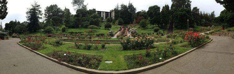 Oakland Rose Garden <br /> April 2014<br /> Oakland Rose Garden 2014-04-21 at 14-14-56