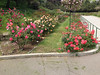 Oakland Rose Garden <br /> April 2014<br /> Oakland Rose Garden 2014-04-21 at 14-12-58