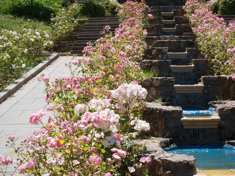 Oakland Roses in Bloom<br /> Oakland Rose Garden 2012-06-08 at 14-01-01