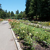 Oakland Rose Garden in Bloom