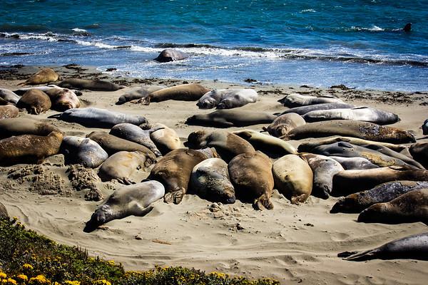 Sunning the Sea Lions