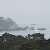 Point Lobos State Reserve, CA.