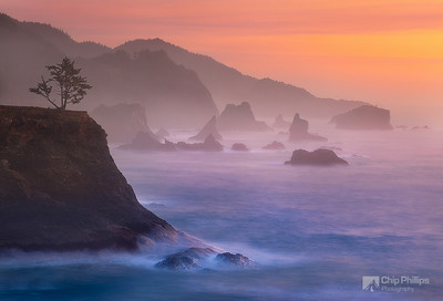 """""""Misty Evening, Southern Oregon Coast""""  Sea stacks and a lone tree along a remote section of the Oregon Coast."""
