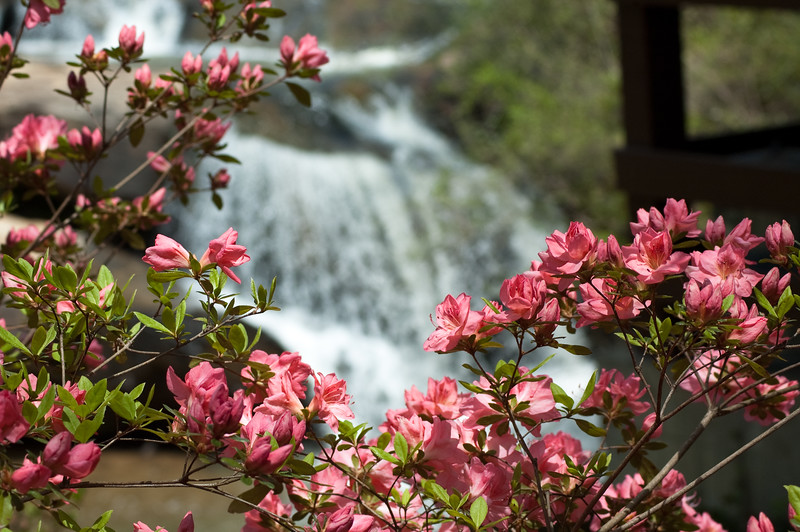 Flowers at Chau Ram Falls04