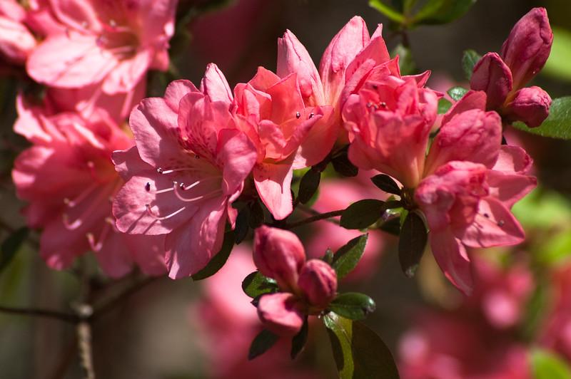 Flowers at Chau Ram Falls22