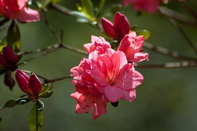 Flowers in Oconee County