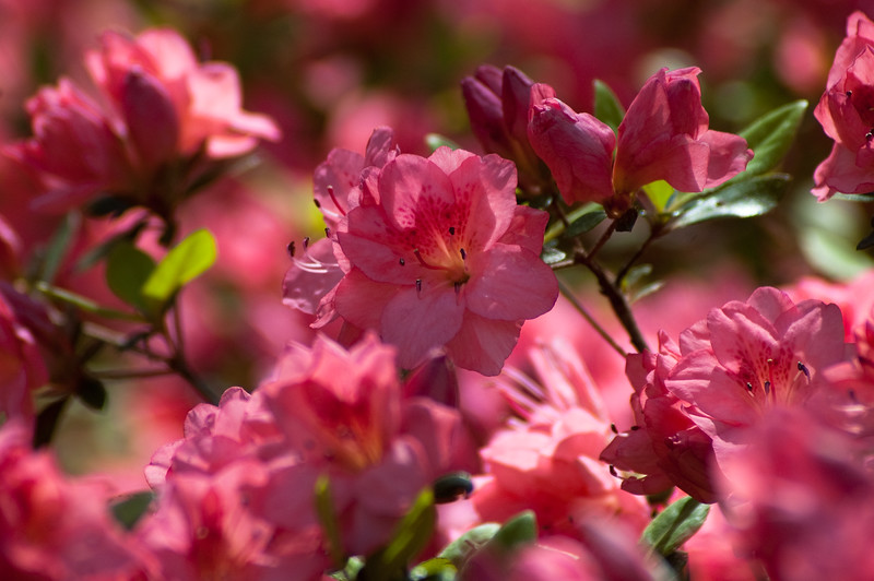 Flowers at Chau Ram Falls10