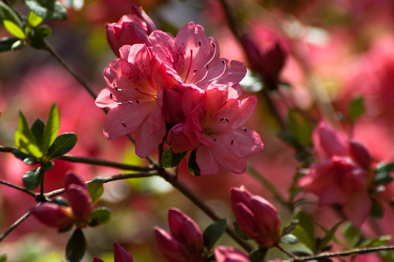 Flowers at Chau Ram Falls09