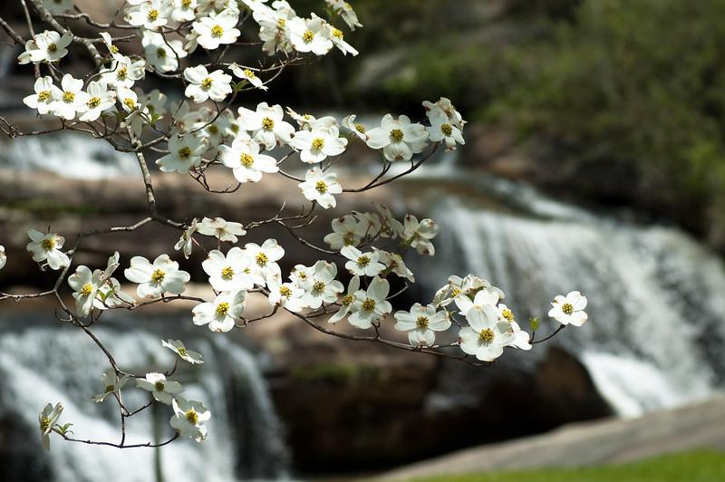 Flowers at Chau Ram Falls13