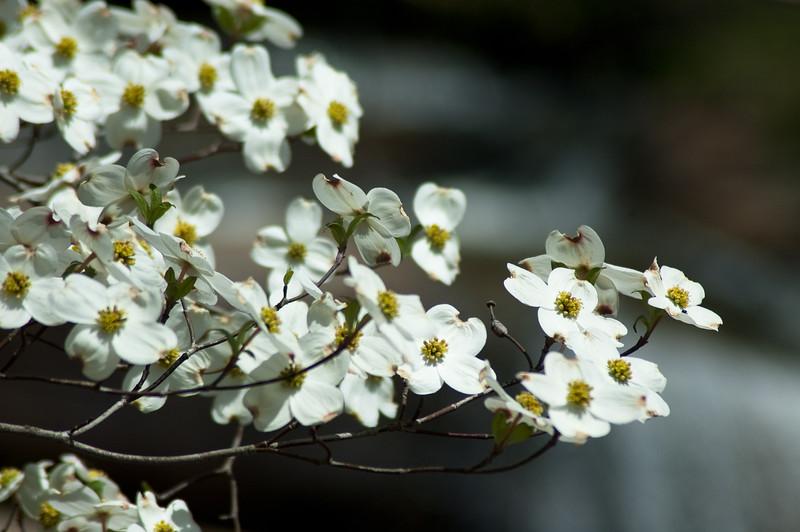 Flowers at Chau Ram Falls11