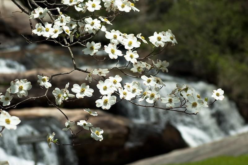 Flowers at Chau Ram Falls12