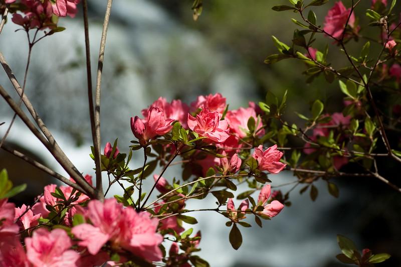 Flowers at Chau Ram Falls19