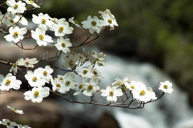 Flowers at Chau Ram Falls15