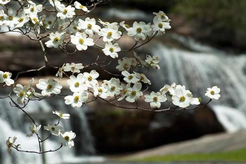Flowers at Chau Ram Falls14