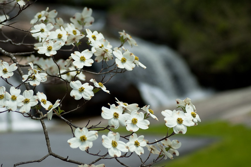 Flowers at Chau Ram Falls02