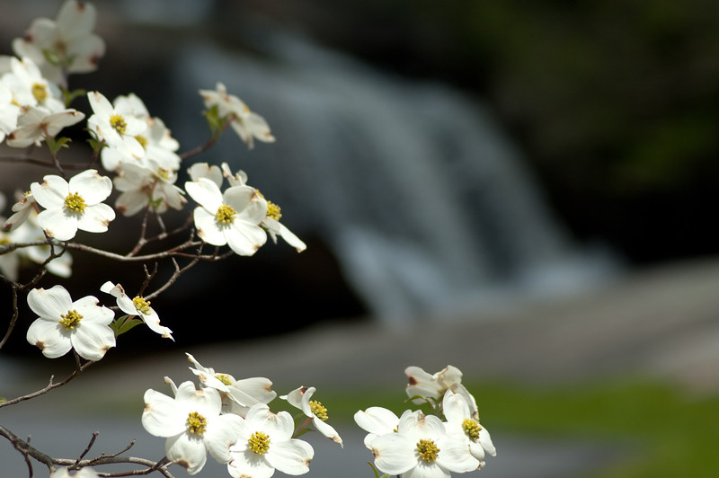Flowers at Chau Ram Falls03