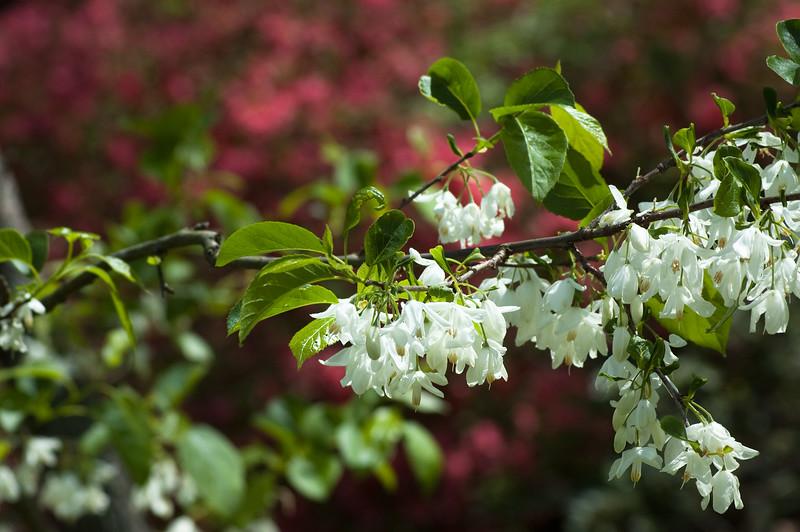 Flowers at Chau Ram Falls24