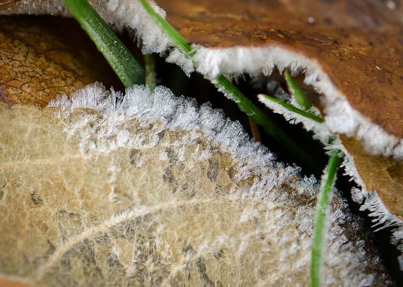 Leaf Frost - 1024x768 pixels