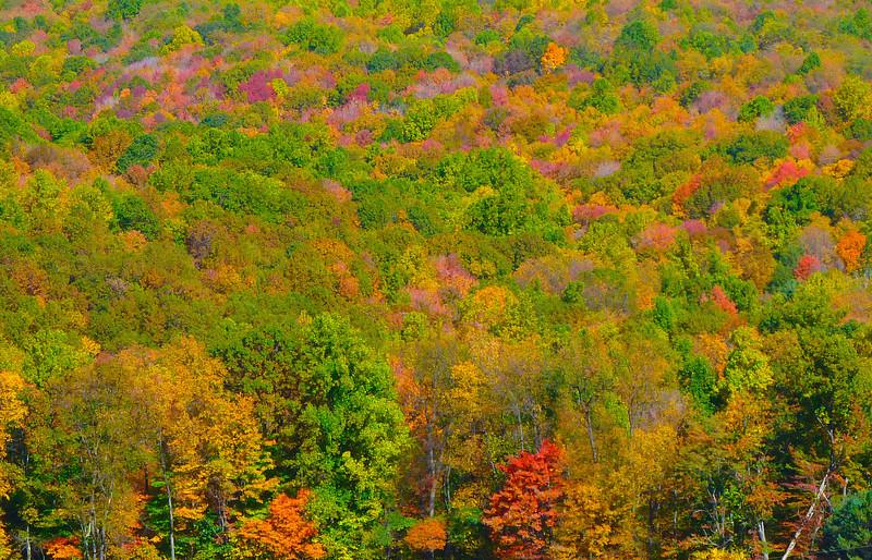 Fall Colors @ Kentuck Knob-1