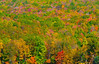 Fall Colors @ Kentuck Knob-1