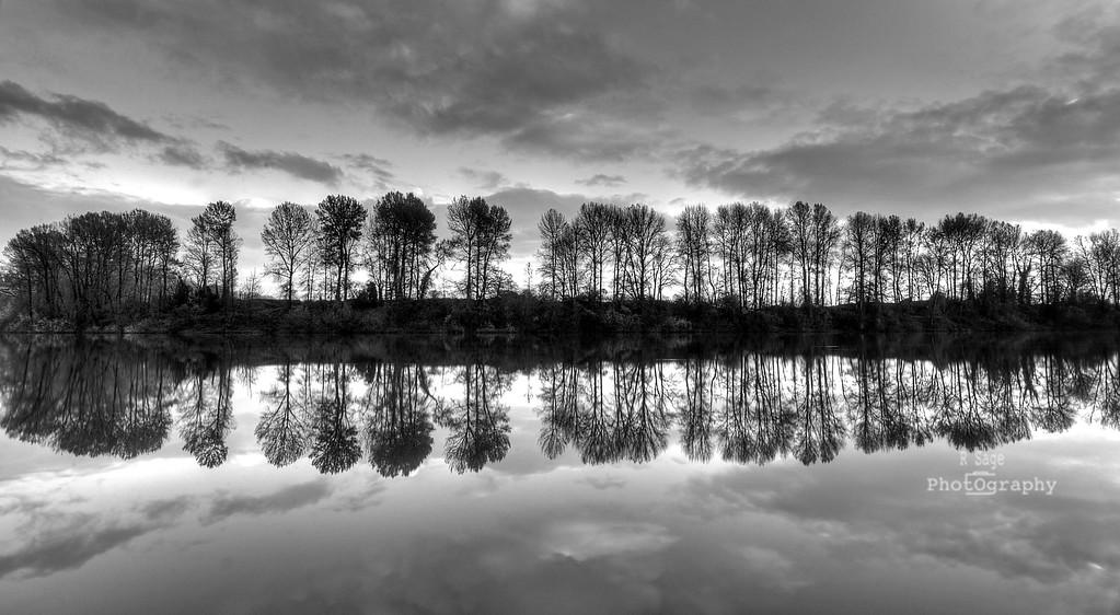 willamette reflection b&w