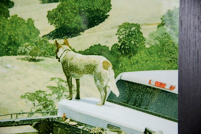 """""""Vineyard Dog"""" detail of print/wood"""